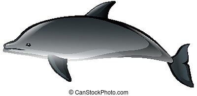 A dolphin in cartoon style on white background