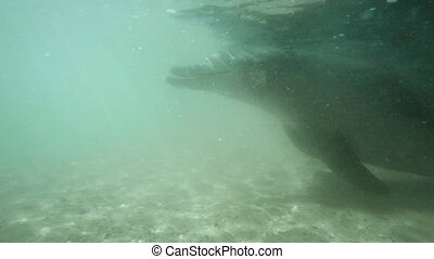 A dolphin passing by - A slow motion underwater shot o a...