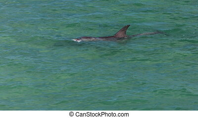 A dolphin underwater shot - A medium shot of a dolphin...