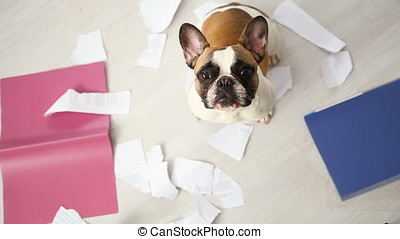 A domestic pet has taken on a home. Torn documents on white...