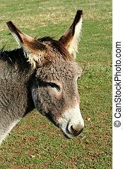 A donkey in green field