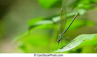 A dragonfly close-up sits on a leaf.