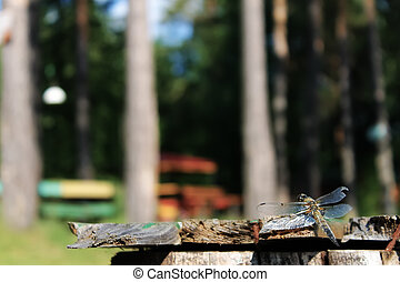 A dragonfly sits on a bench in the background of trees