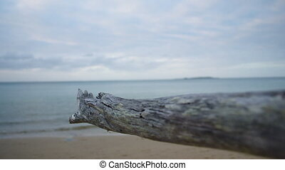 A dried driftwood in close up - A close up shot of a dried...