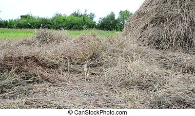 dry hay and haystack outdoors - A dry hay and haystack...