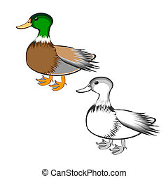 A duck isolated on a white background. Colorful and...