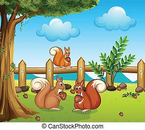 a, eichhörnchen, essende, nuß