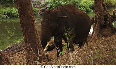 A elephant standing near a river in India - The elephant...