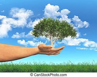 a entouré, arbre, tenue, femelle transmet