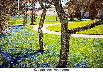 a, fält, av, blå, wildflowers