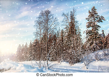 A fabulous winter day in the north of Karelia. Russia