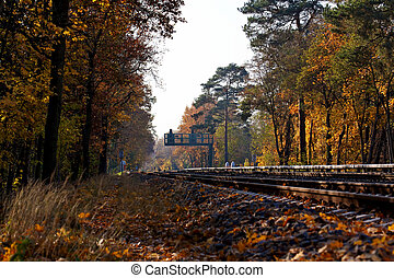 A Fall forest landscape with railroad tracks running through...