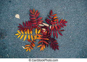 a fallen leaf on the pavement