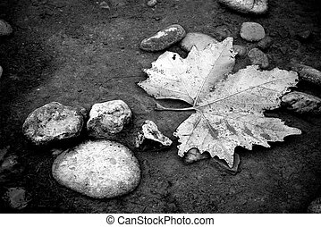A fallen maple leaf underwater in black and white.