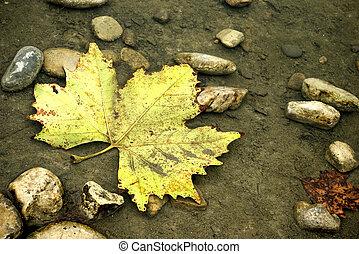 A fallen maple leaf underwater on a lake shore.