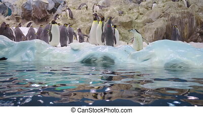 A family of cute penguins in closeup. A pack of curious penguins
