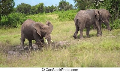 A family of elephants leaves, and young elephant splash water from a puddle