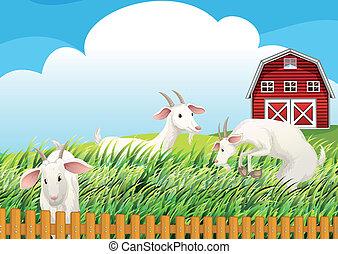 A farm with three goats