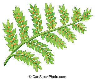 a, farn, pflanze