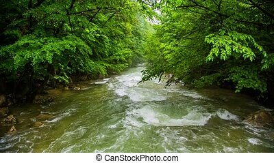A fast river in a green forest - Fast full-flowing mountain...