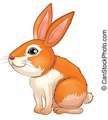 A fat bunny
