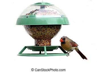 A female cardinal perched at a bird feeder