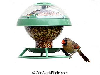 A female cardinal perched at a bird feeder