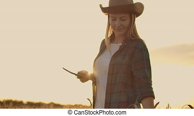 A female farmer in a plaid shirt with a tablet computer in her hands is walking across a wheat field at sunset, checking. The quality and maturity of the crop.