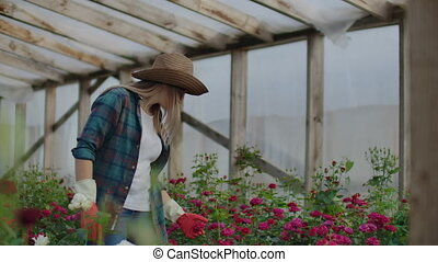 A female gardener is walking in a gloved greenhouse watching...