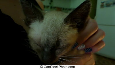 A female hand caresses a tiny siamese kitten with closed eyes.