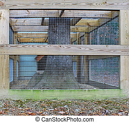 A fenced in and framed Chicken coupe pen around an oak tree with room for your text.