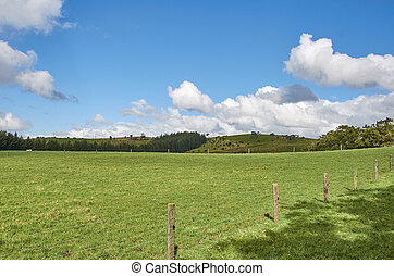 A fenced paddock in Keri Keri New Zealand, featuring a rich green meadow against a backdrop of a blue sky with a scattering of clouds