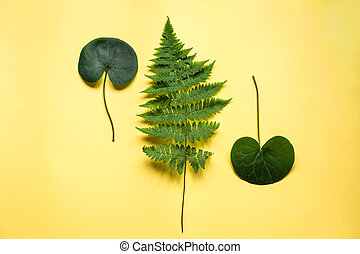 A fern on yellow paper background, top view
