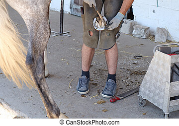 ferrier changes a horse's iron and plants nails in the hoof