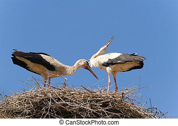 A few of the stork nest.