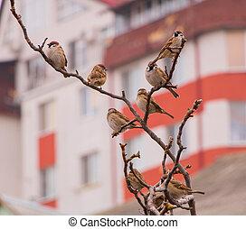 A few sparrows sitting on a branch