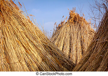 View on tied bundles of dry reeds, packed and ready for further industrial process.