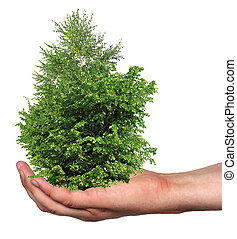 a few trees in a hand, isolated