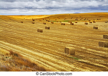 A field after a harvest - Huge field in state of Montana...