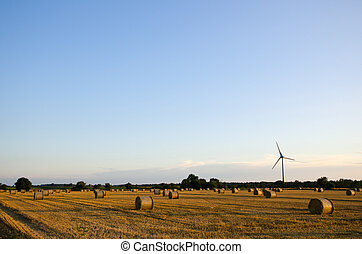 A field of straw bales and a windmill