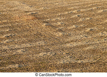 A field of straw stubble