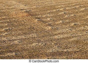A field of straw stubble