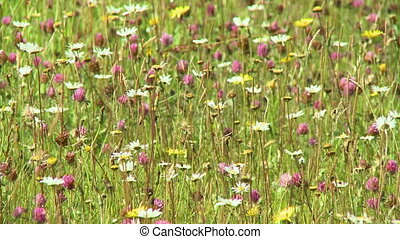 A field of various wildflowers - A sunny field filled with a...