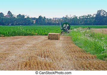 Field - A Field of wheat with square bale
