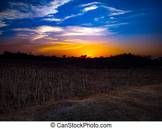 A field under the gorgeous yellow and blue sunset sky