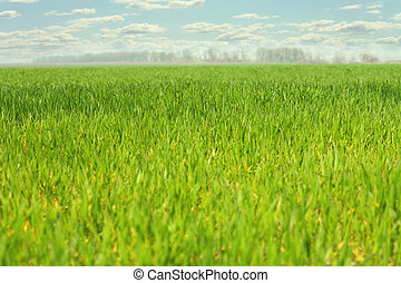 a field with grass