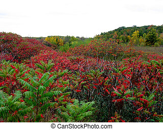 A field with the colors of Fall a mix of red orange and green-Stock Photos