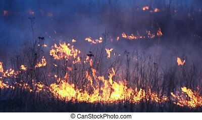 a fire in the forest, burning grass is eaten by flames -...