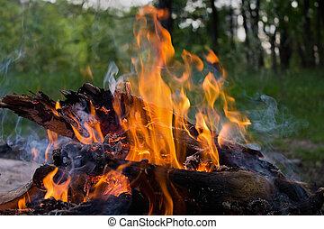 a fire in the woods closeup
