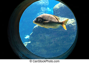 aquarium - a fish swimming in an aquarium